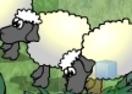 Sheep Reaction